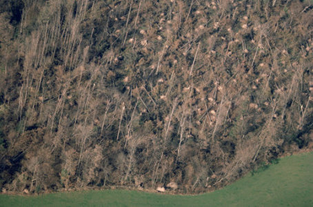 Hurricane damage to woodland in Ardingly, West Sussex, England.